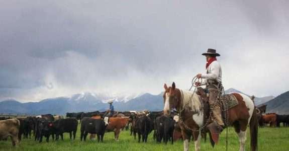 Alderspring Ranch: conheça a marca americana de carne orgânica produzida a pasto