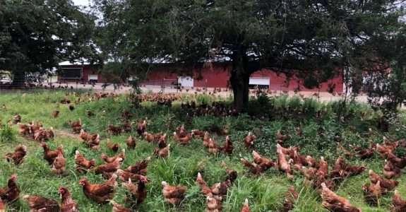 O que a forte recepção do IPO da Vital Farms significa  indústria orgânica?