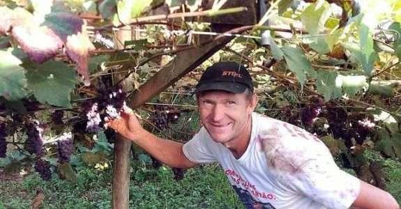 Família se destaca na produção de uva orgânica em Santa Catarina
