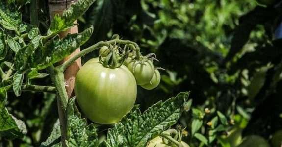 Produção e consumo de produtos orgânicos no mundo e no Brasil