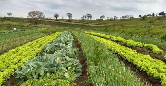 Itesp apoia a produção de alimentos orgânicos na comunidade quilombola Cafundó