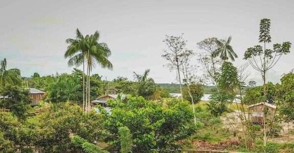 O príncipe, os brasileiros e a expansão das agroflorestas
