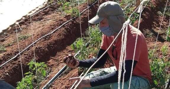 Paraná usa a internet para capacitação em agricultura orgânica