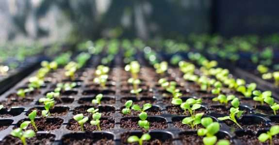Legislação de sementes e mudas repercute no campo
