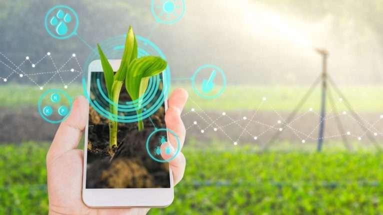 smart-phone no campo
