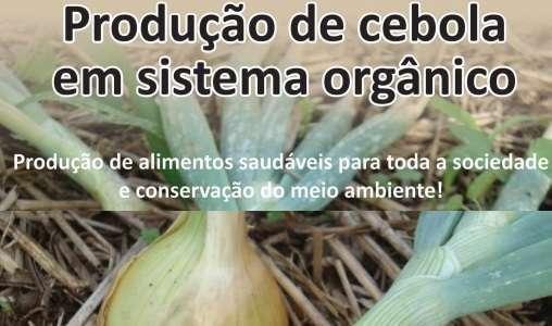 Epagri publica cartilha sobre produção de cebola em sistema orgânico