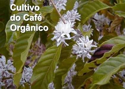 Sistemas de produção Embrapa: Cultivo de Café Orgânico