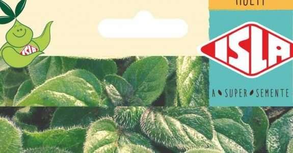Sementes Orgânicas: novas variedades são lançadas