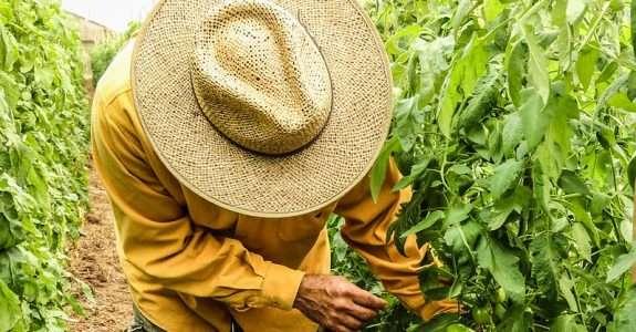 Agricultura orgânica avança, mas produtores cobram recursos e menos burocracia