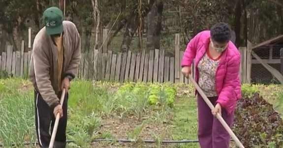 Paraná é o estado brasileiro com maior número de produtores orgânicos, diz Instituto de Desenvolvimento Rural
