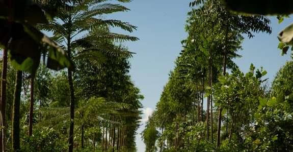 Potência em commodities agrícolas, Brasil é coadjuvante em orgânicos