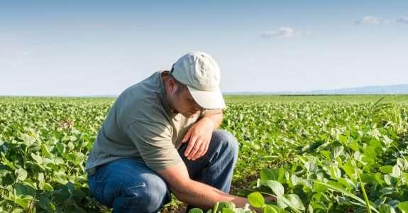 Preços da soja orgânica nos EUA registra recorde e impulsionam inflação dos alimentos